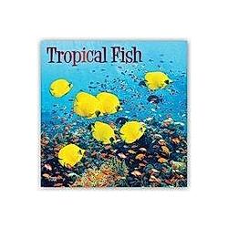 Tropical Fish - Tropische Fische 2021- 16-Monatskalender