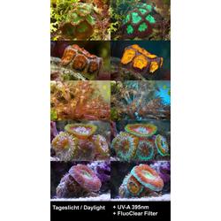 BRESSER Mikroskopfilter FluoClear Filter für Fluoreszenz 67mm Slim