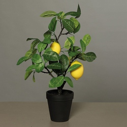 Zitronenbaum im Topf Kunststoff DPI 57102 (H 48 cm)
