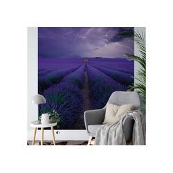 A.S. Création Fototapete, Vlies Foto Tapete Lavendel Field Lavender DD119090 Natur Designwall