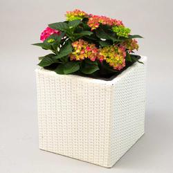 Pflanzkübel Polyrattan quadratisch 30x30x30cm weiß