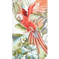 Bild Papagei