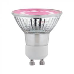 Paulmann 28736 LED Grow Green Reflektor Pflanzenlampe 3,5 Watt GU10 1.100K Wachstumslicht