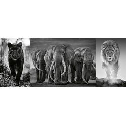 Panter Elefanten Löwe. Puzzle 1000 Teile