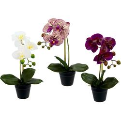 Kunstorchidee Phalaenopsis, I.GE.A., Höhe 30 cm, im Kunststofftopf, 3er Set