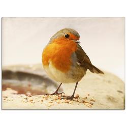 Artland Glasbild Rotkehlchen, Vögel (1 Stück) 80 cm x 60 cm x 1,1 cm