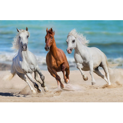 Fototapete Horse Herd Run Gallop, glatt 3,50 m x 2,60 m