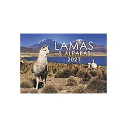 Lamas und Alpakas 2021