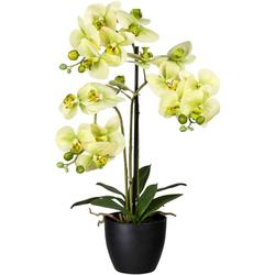Kunstorchidee Phalaenopsis Orchidee Phalaenopsis, Creativ green, Höhe 65 cm grün