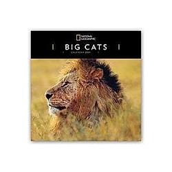 Big Cats - Raubkatzen - Löwen - Tiger - Geparden - Leoparden 2021