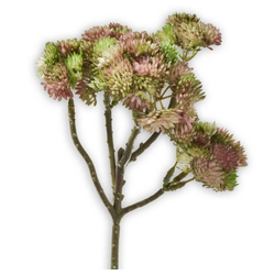 Kunstblume Fetthenne Kunstpflanze Dekopflanze 1 Stk 30 cm hellgrün Fetthenne, matches21 HOME & HOBBY, Höhe 30 cm, Indoor