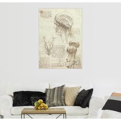 Posterlounge Wandbild, Gehirn und Schädel 30 cm x 40 cm