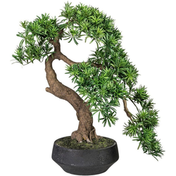 Kunstbonsai Bonsai Podocarpus Bonsai, Creativ green, Höhe 75 cm