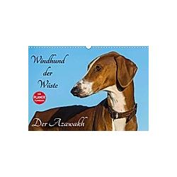 Windhund der Wüste - Der Azawakh (Wandkalender 2021 DIN A3 quer)