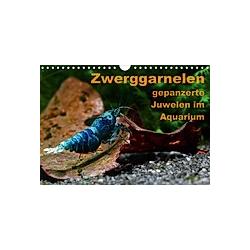 Zwerggarnelen - gepanzerte Juwelen im Aquarium (Wandkalender 2021 DIN A4 quer) - Kalender