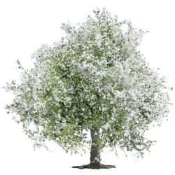 Busch 3651 Baum Apfelbaum 75mm 1St.