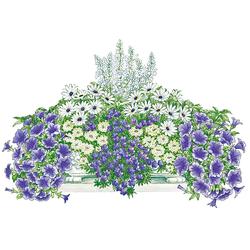 BCM Balkonpflanze Blau-Weißer Traum Set, 8 Pflanzen mit Erde