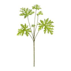 Kunstpflanze Zitronengeranienzweig, 5er Set, Farbe grün, Höhe ca. 61 cm