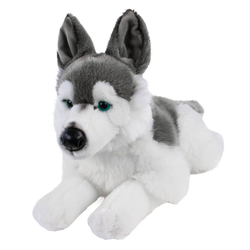 Teddys Rothenburg Kuscheltier Hund Husky liegend 45 cm (mit Schwanz) (Hunde Stoffhusky, Plüschtiere, Stofftiere, Huskys, Plüschhunde, Stoffhund, Plüschhusky)
