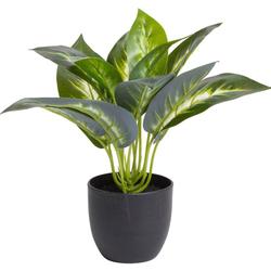 Künstliche Zimmerpflanze Dieffenbachia Dieffenbachia, Botanic-Haus, Höhe 26 cm