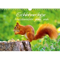Eichhörnchen-Nussknacker ganz nah (Wandkalender 2021 DIN A4 quer)