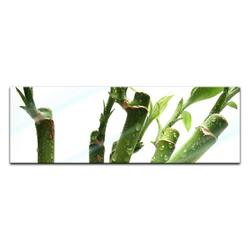 Bilderdepot24 Glasbild, Glasbild - Bambus 120 cm x 40 cm