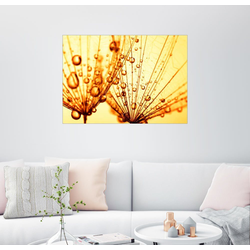 Posterlounge Wandbild, Goldtröpfchen 40 cm x 30 cm