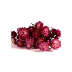 Trockenblume Strohblumen Helichrysum Trockenblumen Strauß Bund Blumen getrocknet DIY Strohblume, ROSEMARIE SCHULZ Heidelberg, Höhe 10 cm rot