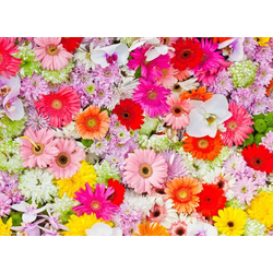 """Platzset, Tischset I Platzset - Blumen - """"Buntes Blumenmeer"""" - 12 Stück aus hochwertigem Papier in Aufbewahrungsmappe, perfekt für die Frühlingsdekoration, Tischsetmacher, (12-St)"""