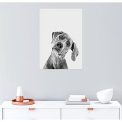 Posterlounge Wandbild, Fragender Blick 50 cm x 70 cm