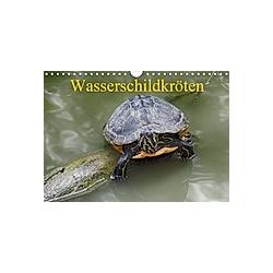 Wasserschildkröten (Wandkalender 2021 DIN A4 quer)