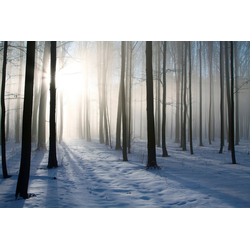 Papermoon Fototapete Misty Winter Forest, glatt 3,5 m x 2,6 m
