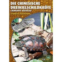 Art für Art: Die Chinesische Dreikielschildkröte als Buch von Thomas Hofmann