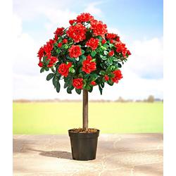 Kunstbaum Blütenbäumchen, dynamic24, Höhe 58 cm, Kunstpflanze Baum Pflanze Blume Blüte Busch Dekopflanze