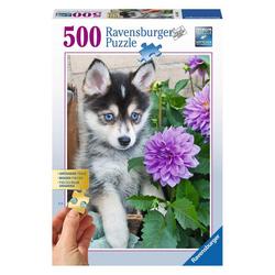 Ravensburger Puzzle Putziger Husky, 500 Puzzleteile