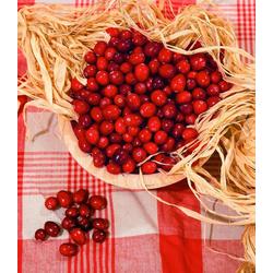 BCM Obstpflanze Cranberry
