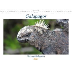 Galapagos 2021 - Tiere auf Galapagos (Wandkalender 2021 DIN A4 quer)