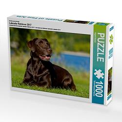Labrador Retriever 2017 Lege-Größe 64 x 48 cm Foto-Puzzle Bild von SiSta-Tierfoto Puzzle