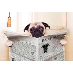 Papermoon Fototapete Newspaper Dog, glatt 3 m x 2,23 m