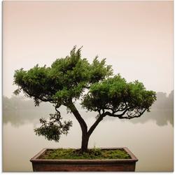 Artland Glasbild Chinesischer Bonsaibaum, Bäume (1 Stück) 30 cm x 30 cm
