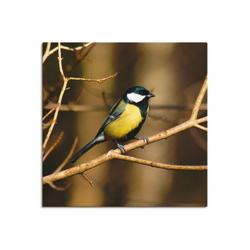Artland Wandbild Kohlmeise im Wald, Vögel (1 Stück) 50 cm x 50 cm