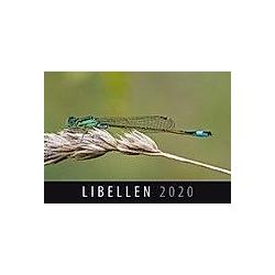 Libellen 2020