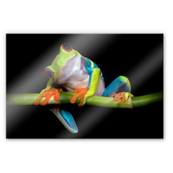 Wall-Art Küchenrückwand Spritzschutz Frisch Green Frog, (1-tlg) 80 cm x 60 cm x 0,4 cm