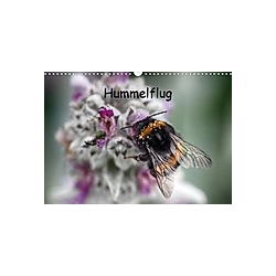 Hummelflug (Wandkalender 2021 DIN A3 quer)