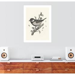 Posterlounge Wandbild, Kohlmeise 100 cm x 130 cm