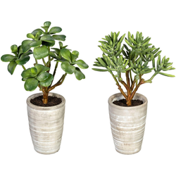 Künstliche Zimmerpflanze Sukkulenten Kalanchoe und Aloe Sukkulenten Kalanchoe und Aloe, Creativ green, Höhe 28 cm, im Zementtopf, 2er Set