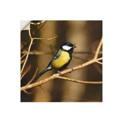 Artland Wandbild Kohlmeise im Wald, Vögel (1 Stück) 40 cm x 40 cm
