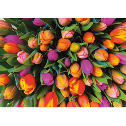 Piatnik Puzzle Tulpen, 1000 Puzzleteile