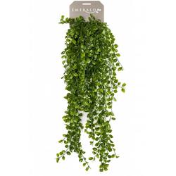 Emerald Künstlicher Kletter-Ficus künstlich 80 cm