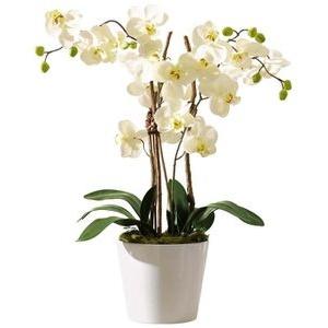 Schneider-GmbH Kunstpflanze Orchidee Elegance, Höhe 54 cm, im Keramik-Topf